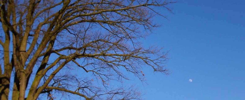tree_sky_moon_eff